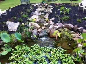 Koi fish pond, koi pond design