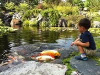 Children and ponds
