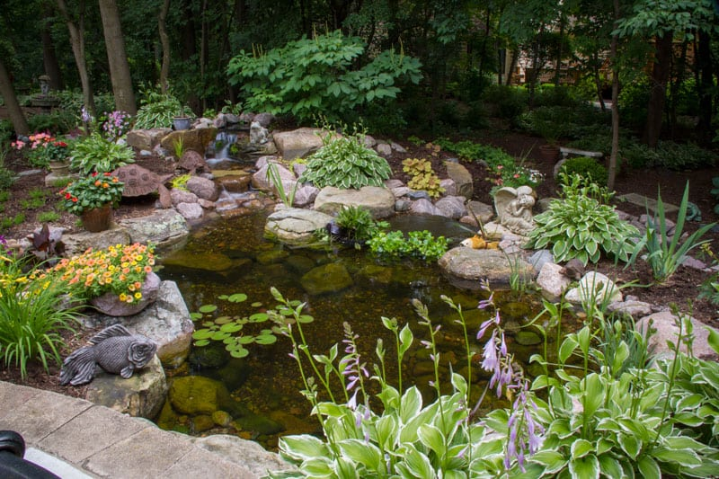 wooded backyard pond