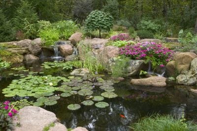 Beautiful Backyard Pond installed by Universal Aquatics