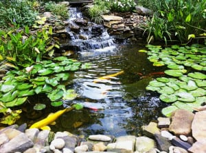 Natural Pond Design & Installation
